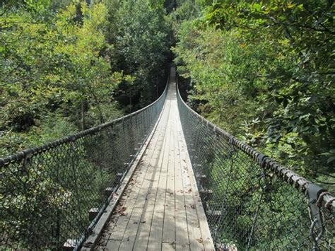 foxfire mountain swinging bridge the bridge picture of foxfire mountain swinging bridge