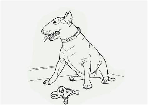 free coloring pages of pitbull dog