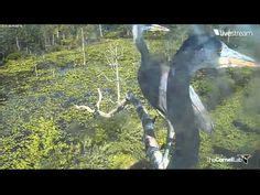 cornell bird watching website 1000 images about bird cameras live on blue heron labs and hawks
