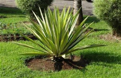 piante da cortile 10 piante grasse da esterno che restano verdi per tutto l