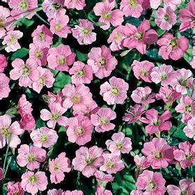 Flowers That Grow Fast From Seed - seeds for groundcover plants for the home gardener