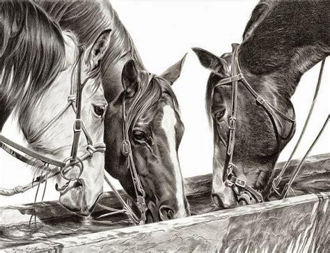 imagenes en blanco y negro de caballos cuadros pinturas oleos dibujos a l 225 piz de caballos con