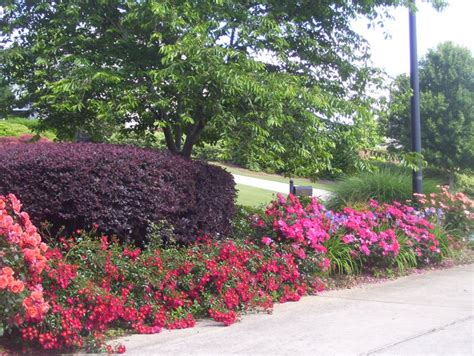 17 best images about landscaping on pinterest shrubs planters and geraniums
