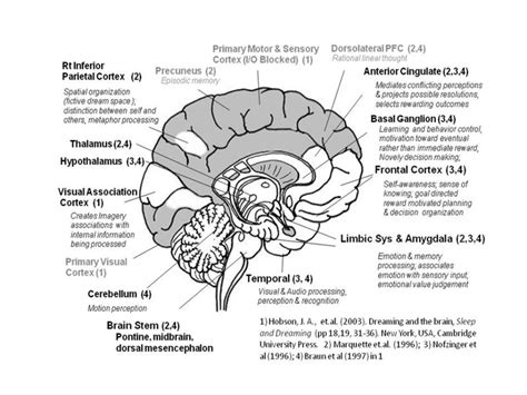 diagram of the and its functions brain structures and functions diagram anatomy organ
