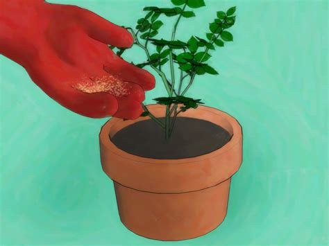 how to grow roses from seed 13 steps with pictures wikihow