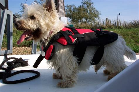 dog boat life jackets ezydog life jackets shop