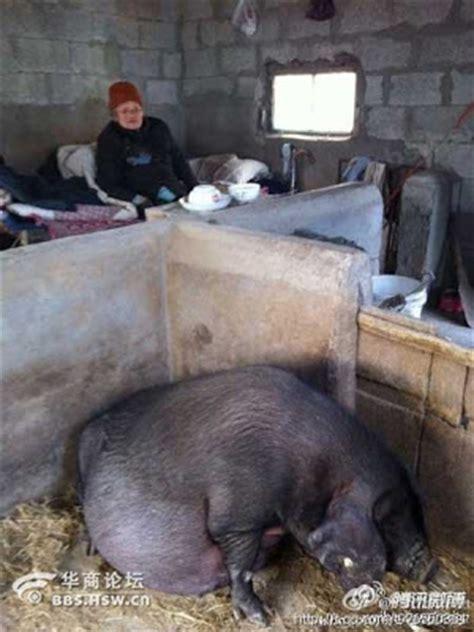 gambar anak derhaka tinggalkan ibu dikandang babi sedangkan mereka tinggal di rumah mewah