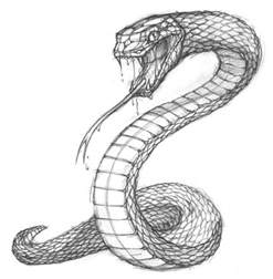 best 25 snake drawing ideas on pinterest snake sketch