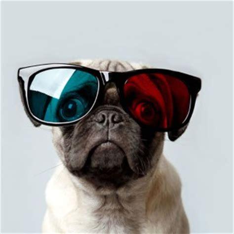 pug eye patch celestialpug borking pug deviantart