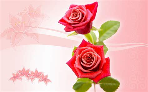 imagenes rosas para el dia de la madre flores feliz dia de la madre 12 fotos dia de la madre