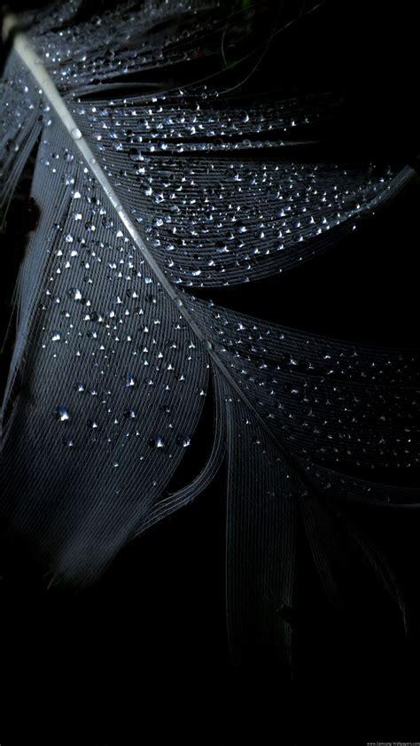 black feather rain drops iphone   hd wallpaper ipod
