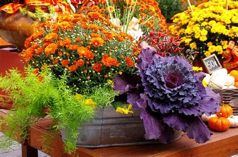 fall container gardens fall garden planters ideas photograph fall container wow i