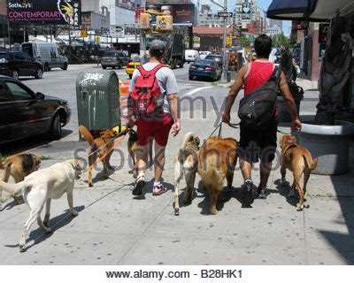 professional walker sitter stock photos sitter stock images alamy