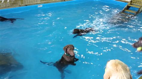 best swimming dogs the non swimming