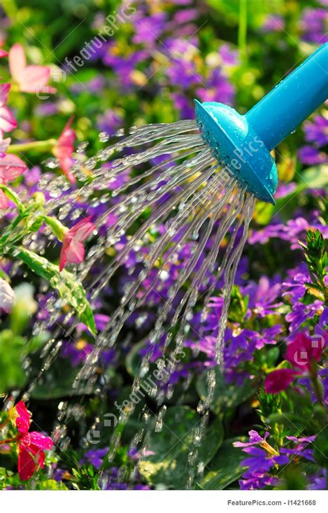 watering flowers picture