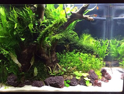 small aquarium aquascape 17 best images about aquariums on pinterest planted aquarium tropical fish and fish aquarium
