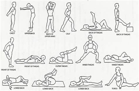 best flexibility exercises top 5 benefits of exercise