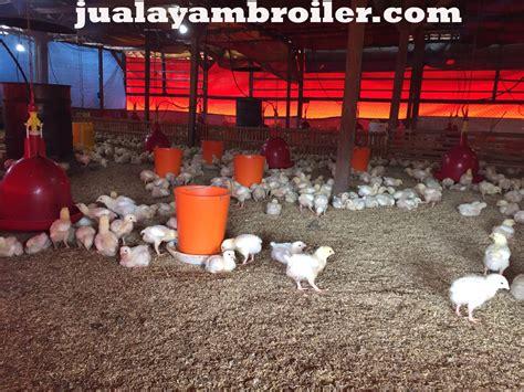 Jual Bibit Ayam Broiler Di Bekasi jual ayam broiler di harapan baru bekasi jual ayam broiler