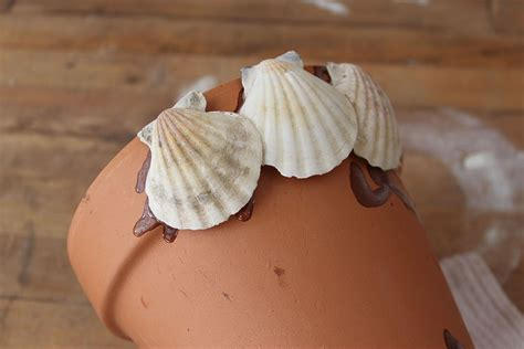 hometalk sea shell flower pot