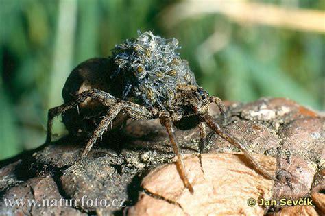 spinnen fernhalten wohnung spinnen aus der wohnung fernhalten seite 2