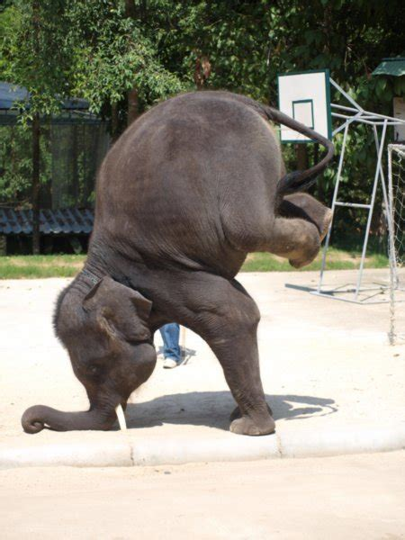 elephant tricks photo