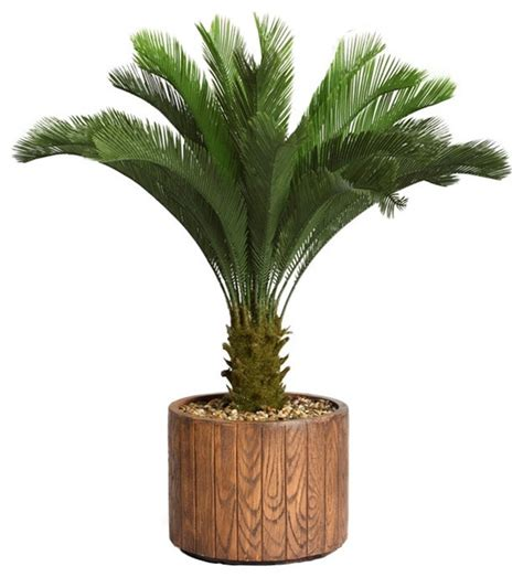 Palm Tree Planters by 53 Inch Cycas Palm Tree In 16 Inch