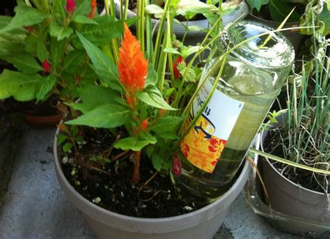 diy plant watering bottle 21 home hacks that are crazy enough to work bob vila