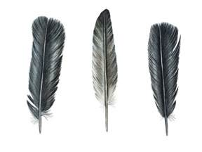 vere is vol bekoring on pinterest feather art feathers