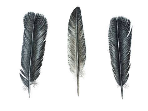 Feather L by Vere Is Vol Bekoring On Feather Feathers