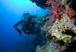 marine biologist description what does a marine biologist do and how to become a marine