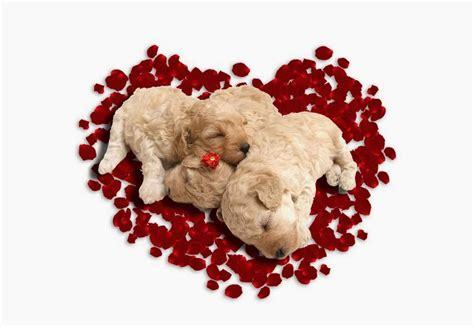 animal valentines animal wallpaper related keywords animal