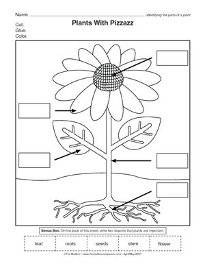 Galerry printable plant activities worksheets