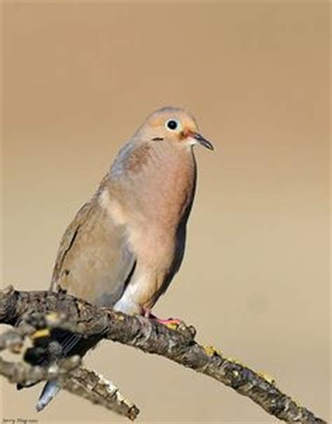 1000 images about doves on pinterest white doves