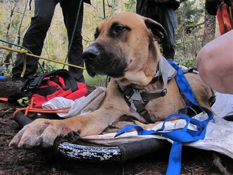 oregon humane society dogs rescued in santiam forest oregon humane society