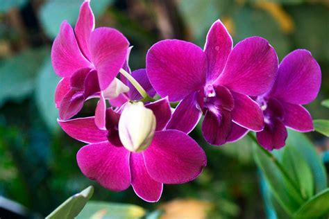 Jenis Pot Anggrek cara merawat dan memelihara tanaman hias anggrek tanaman