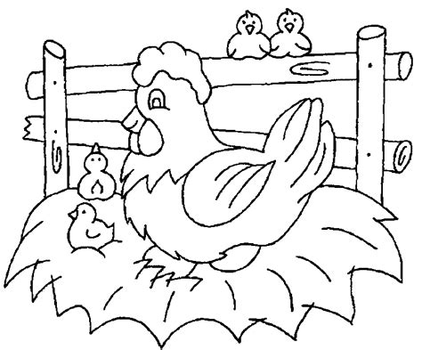 chicken coloring page free printable chicken coloring pages for kids coloring home
