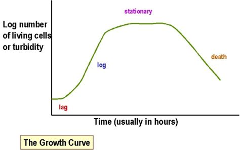 a culture of growth bacterial growth curve phases and significance microbeonline