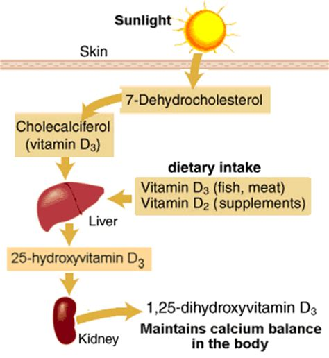 Vitamin Metabolisme chemical structure of vitamins and minerals