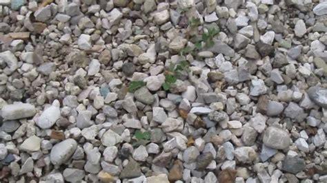 giardini senza erba togliere erba su ghiaino senza chimica