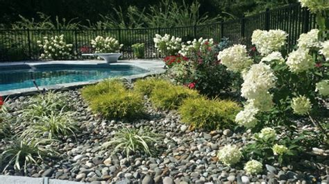 perfect poolside plants for your dutchess county ny home lehigh landscaping landscapers in