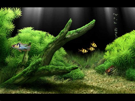 wallpaper hd bergerak wallpaper animasi 3d aquarium bergerak images