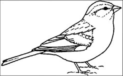 coloring page of florida state bird free bird education tools for teachers
