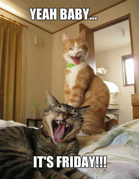 Friday Cat Meme - friday funday great novels remade by cats the