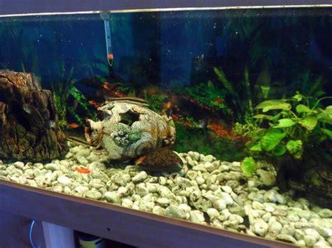 gebrauchtes aquarium 360 l mit unterschrank in mannheim - Gebrauchtes Aquarium Kaufen