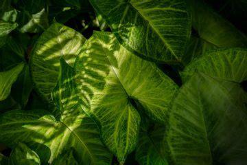 schattige zimmerpflanzen articles gartenjournal net