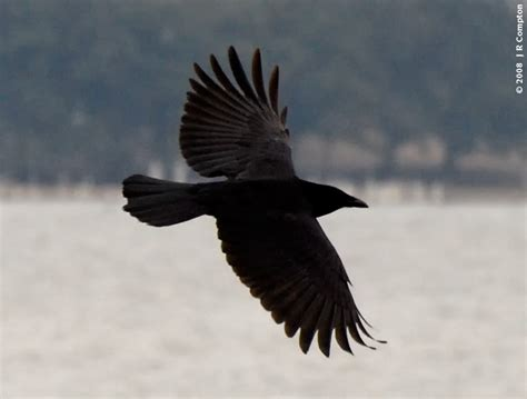 three gifts from crow wandering woman wondering