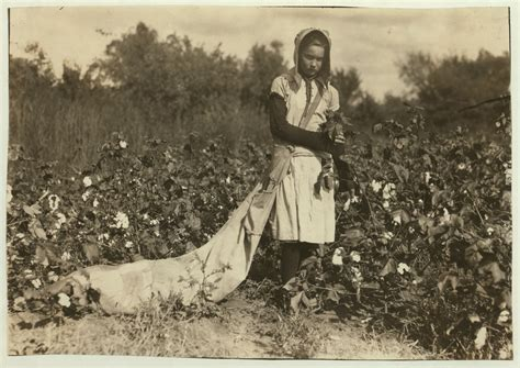 a black s journey from cotton picking to college professor lessons about race class and gender in america black studies and critical thinking books file no known restrictions picking cotton by lewis w hine