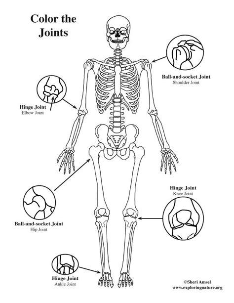 kaplan human anatomy coloring book 92 human anatomy coloring book pdf the human brain
