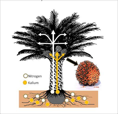 Harga Pupuk Npk Mutiara Sawit kebutuhan pupuk kelapa sawit harga pupuk kelapa sawit