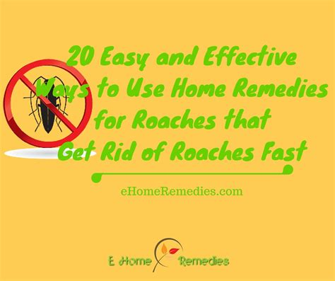 20 ways to use home remedies for roaches that get rid of